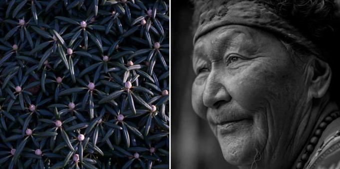 © Caroline Alida – Hearing songs in pine trees