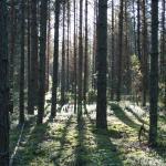 Ook de grote bossen zijn niet aangeraakt door de mens. Het woud is waarlijk groots en nodigt je uit om zijn geheimen te ontdekken