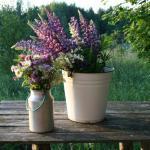 In de wijde weiden, mossige moerassen en woekerende wouden vind je ontelbaar veel soorten prachtige bloemen