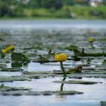 Een prachtig verschijnsel zijn de uitgestrekte meren en zuivere rivieren